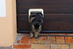 Συμπιέσεις παχιές γατών μέσω του χτυπήματος γατών στοκ φωτογραφίες