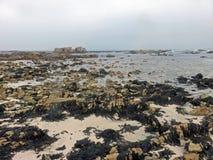 Συμφωνία ζιζανίων θάλασσας Στοκ Εικόνα