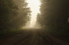 Συνάντηση της αυγής στο δασικό δρόμο στοκ φωτογραφίες με δικαίωμα ελεύθερης χρήσης