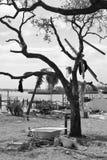 Συνέπεια της Katrina στοκ εικόνες με δικαίωμα ελεύθερης χρήσης