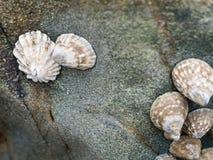 Συνέλευση των μυδιών στο βράχο στοκ φωτογραφία