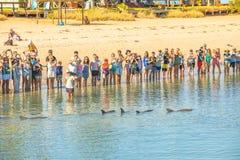 Συναντήστε τα δελφίνια της Mia πιθήκων Στοκ Φωτογραφίες