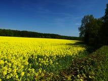 συναπόσπορος πεδίων Στοκ φωτογραφίες με δικαίωμα ελεύθερης χρήσης