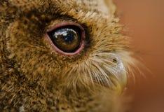 Συναρπαστικά μάτια Στοκ Εικόνα