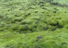 Συναρπαστικοί πράσινοι καλυμμένοι βρύο βράχοι λάβας στη νότια Ισλανδία, υπόβαθρο στοκ εικόνες