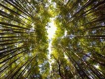 Συναρπαστικό δάσος Στοκ φωτογραφίες με δικαίωμα ελεύθερης χρήσης