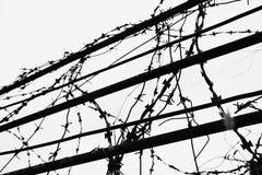 Συνδεμένος με καλώδιο φράκτης με κυλημένος Στοκ Φωτογραφίες