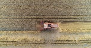 Συνδυάστε τη θεριστική μηχανή συγκομίζοντας το γεωργικό τομέα σίτου απόθεμα βίντεο