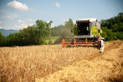 Συνδυάστε το σιτάρι συγκομιδής σε ένα καυτό θερινό απόγευμα - agricultur στοκ εικόνες