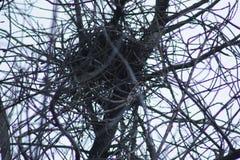 Συνδυασμένοι κλάδοι δέντρων Στοκ εικόνα με δικαίωμα ελεύθερης χρήσης
