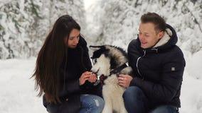 Συνεδρίαση ανδρών και γυναικών οικογενειακών ζευγών στα ξύλα που αγκαλιάζουν το αγαπημένο σιβηρικό hussy σκυλί τους Ευτυχείς άνθρ απόθεμα βίντεο