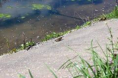 Συνεδρίαση βατράχων στη λίμνη ακτών στοκ φωτογραφία με δικαίωμα ελεύθερης χρήσης