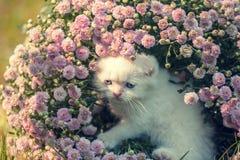 Συνεδρίαση γατακιών στα λουλούδια Στοκ φωτογραφία με δικαίωμα ελεύθερης χρήσης