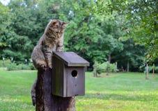 Συνεδρίαση γατών γατακιών πέρα από το birdhouse Στοκ Εικόνα