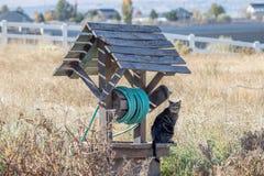 Συνεδρίαση γατών σε έναν κήπο που κυνηγά καλά για τα ποντίκια Στοκ Φωτογραφίες