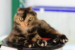Συνεδρίαση γατών στα απορρίμματα στοκ εικόνες