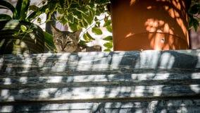 Συνεδρίαση γατών στον τοίχο που εξετάζει κάτω το φωτογράφο στοκ εικόνα με δικαίωμα ελεύθερης χρήσης
