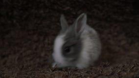 Συνεδρίαση κουνελιών λαγουδάκι απόθεμα βίντεο