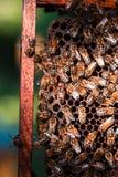 Συνεδρίαση κυψελών μελισσών στην κηρήθρα στοκ φωτογραφία με δικαίωμα ελεύθερης χρήσης