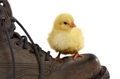 συνεδρίαση παπουτσιών στοκ εικόνες