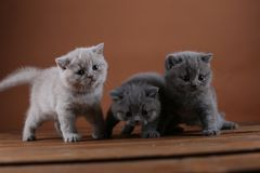 Συνεδρίαση πορτρέτου γατακιών σε ένα ξύλινο υπόβαθρο, που απομονώνεται Στοκ Φωτογραφίες