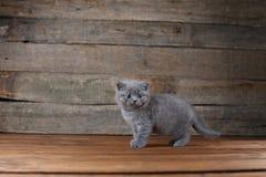 Συνεδρίαση πορτρέτου γατακιών σε ένα ξύλινο υπόβαθρο, που απομονώνεται Στοκ φωτογραφία με δικαίωμα ελεύθερης χρήσης