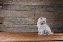 Συνεδρίαση πορτρέτου γατακιών σε ένα ξύλινο υπόβαθρο, που απομονώνεται Στοκ Φωτογραφία