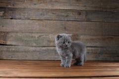 Συνεδρίαση πορτρέτου γατακιών σε ένα ξύλινο υπόβαθρο, που απομονώνεται Στοκ Εικόνες