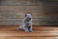 Συνεδρίαση πορτρέτου γατακιών σε ένα ξύλινο υπόβαθρο, Στοκ Φωτογραφία