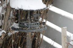Συνεδρίαση πουλιών αρκετά στο χιόνι Στοκ Εικόνες