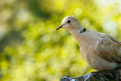 Συνεδρίαση πουλιών σε έναν βράχο και εξέταση σας Στοκ φωτογραφίες με δικαίωμα ελεύθερης χρήσης