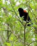 συνεδρίαση πουλιών Στοκ εικόνες με δικαίωμα ελεύθερης χρήσης