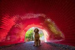 Συνεδρίαση σκυλιών στην κόκκινη σήραγγα Στοκ φωτογραφίες με δικαίωμα ελεύθερης χρήσης