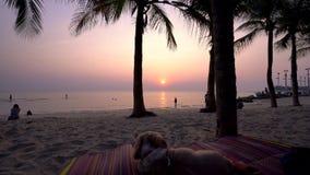 Συνεδρίαση σκυλιών στην παραλία απόθεμα βίντεο