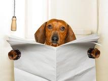 Συνεδρίαση σκυλιών στην τουαλέτα στοκ φωτογραφία με δικαίωμα ελεύθερης χρήσης