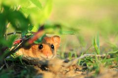 Συνεσταλμένος χαριτωμένος λίγο ζώο στη φύση
