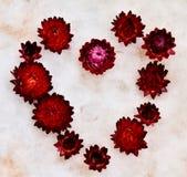 Συνεχή λουλούδια αρσενικών ελαφιών στοκ φωτογραφίες