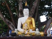 Συνεδρίαση αγαλμάτων του Βούδα κάτω από το δέντρο Bodhi Στοκ φωτογραφία με δικαίωμα ελεύθερης χρήσης