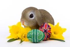 Συνεδρίαση λαγουδάκι Πάσχας σε μια δέσμη των αυγών Πάσχας Στοκ Εικόνες