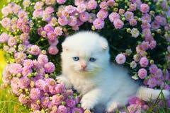 Συνεδρίαση γατακιών στα λουλούδια Στοκ Εικόνες