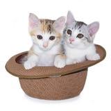 Συνεδρίαση γατακιών στο καπέλο στοκ φωτογραφία