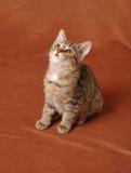 Συνεδρίαση γατακιών Στοκ φωτογραφίες με δικαίωμα ελεύθερης χρήσης
