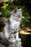 Συνεδρίαση γατακιών Στοκ εικόνα με δικαίωμα ελεύθερης χρήσης