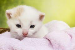 Συνεδρίαση γατών γατακιών σε ένα καλάθι Στοκ εικόνες με δικαίωμα ελεύθερης χρήσης