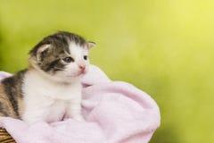 Συνεδρίαση γατών γατακιών σε ένα καλάθι Στοκ Εικόνες