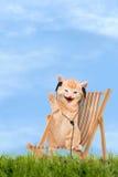Συνεδρίαση γατών/γατακιών στην καρέκλα γεφυρών με τα ακουστικά Στοκ εικόνες με δικαίωμα ελεύθερης χρήσης