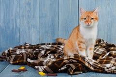Συνεδρίαση γατών πιπεροριζών στο κάλυμμα καρό Στοκ Φωτογραφίες