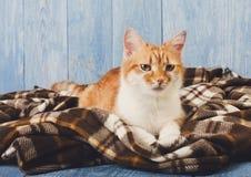 Συνεδρίαση γατών πιπεροριζών στο κάλυμμα καρό Στοκ εικόνα με δικαίωμα ελεύθερης χρήσης