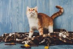 Συνεδρίαση γατών πιπεροριζών στο κάλυμμα καρό Στοκ Εικόνες