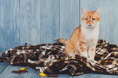 Συνεδρίαση γατών πιπεροριζών στο κάλυμμα καρό Στοκ φωτογραφία με δικαίωμα ελεύθερης χρήσης